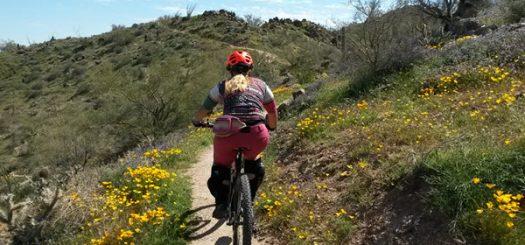 Arizona Flowers Poppin