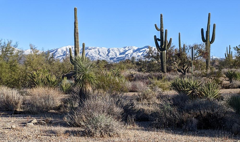 Snow in the Desert
